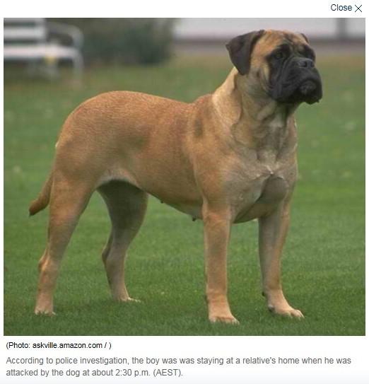 当地市议会动物管理员和警方已经将恶狗抓走并连夜
