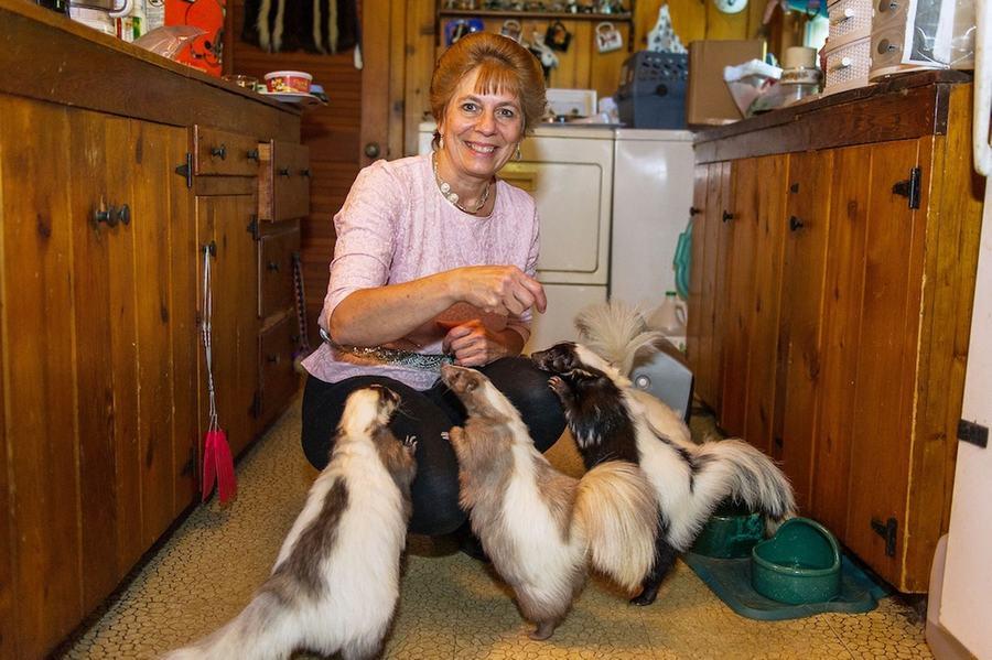 美妇女养50只臭鼬当宠物 腾出5卧室给其住(高清组图)