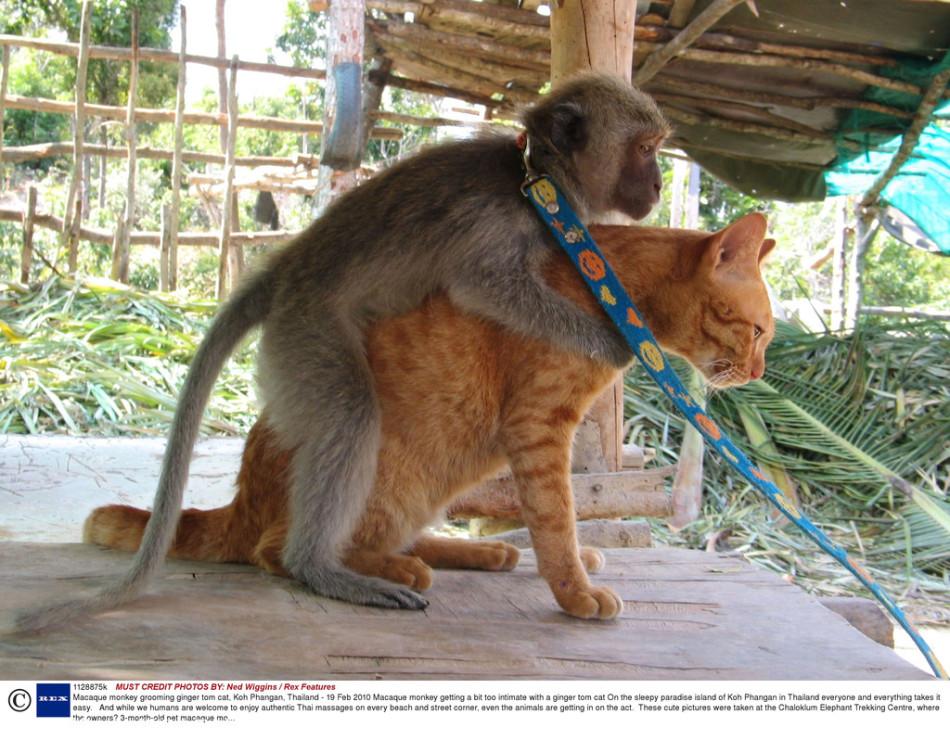 泰国帕岸岛不仅风景优美,是旅游者的天堂,就连小动物的搞笑画面也可让