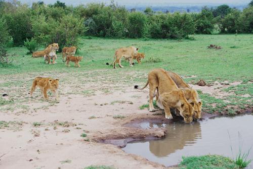 """他""""娶""""了狮子:在非洲保护野生动物的中国人(组图)"""