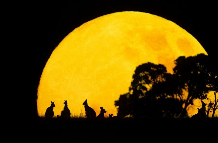 动物剪影照片美轮美奂:黎明黄昏映衬不一样的美